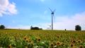 風車 向日葵 夏の動画 30720995