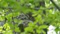 ural, owl, strix 30844918