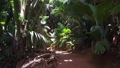 path at jungle woods with palm trees in africa 30987378