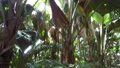 jungle woods with palm trees in africa 30987388