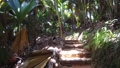 path at jungle woods with palm trees in africa 30987389