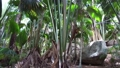 jungle woods with palm trees and rocks in africa 30987390