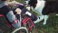 車イス 障害 身体障害の動画 31009984