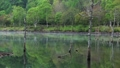 朝の女神湖 フィクス撮影 31079435