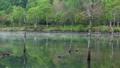 朝の女神湖 フィクス撮影 31114438