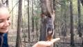 森林 林 森の動画 31233063