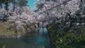 弘前城桜まつり_2017 31278349