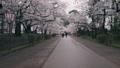 弘前城桜まつり_2017 31278364