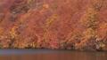 秋の蔦沼(パンニング) 31359893