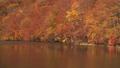 秋の蔦沼 31359894