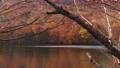 秋の蔦沼 31359898