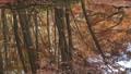 紅葉 蔦の七沼 水面反射 31378443