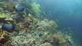 珊瑚 珊瑚礁 魚の動画 31497860