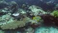 珊瑚 珊瑚礁 魚の動画 31498018