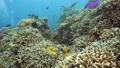 珊瑚 珊瑚礁 魚の動画 31515401