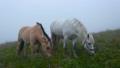 horse, eat, grazing 31537571