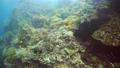 珊瑚 珊瑚礁 魚の動画 31541897