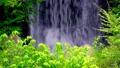 新緑の滝(フィックス) 31563105