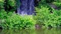 新緑の滝(フィックス) 31563106