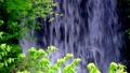 新緑の滝アップ(フィックス) 31563107