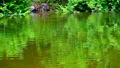 Water rippling water 31612632