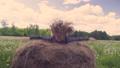 女性 草原 野原の動画 31625688