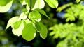 tender green, verdure, foliage 31629835