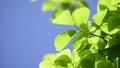 tender green, verdure, foliage 31629836