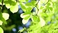 tender green, verdure, foliage 31632431
