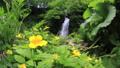瀑布 图由镇 北海道 31838681