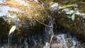 川 リバー 水 せせらぎ 岩 流れ 透明 晴天 ストーン ウォーター 31841758