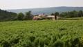 南仏、ワイナリーの葡萄畑 31845870