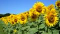 風景 植物 花の動画 31898194