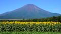 富士山 花の都公園 風景の動画 31899413