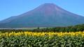 富士山 花の都公園 風景の動画 31899414