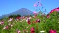 富士山 山 花の都公園の動画 31899417