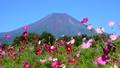 富士山 山 花の都公園の動画 31899418