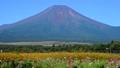富士山 山 花の都公園の動画 31899423