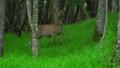 deer, deers, animal 31903465