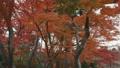 秋色の森 31915753