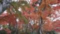秋色の森 31915754