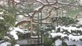 兼六園雪景色 31916028
