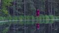 森林 林 森の動画 31933870