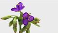 花 開花 開くの動画 31936252