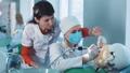歯科 歯科医 メディカルの動画 31961707