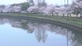 川面に映る桜並木 31982135