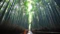京都嵐山Sagano的竹林 32018766