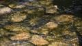 川 川底 水 流れ リバー 光 ひかり 茶色 透明 32056429
