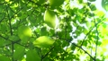 Fresh green leaves Sunlight early summer Eco image image 32172061