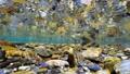 川の中の魚達 32249086